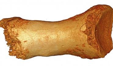 Neandertal_Bone
